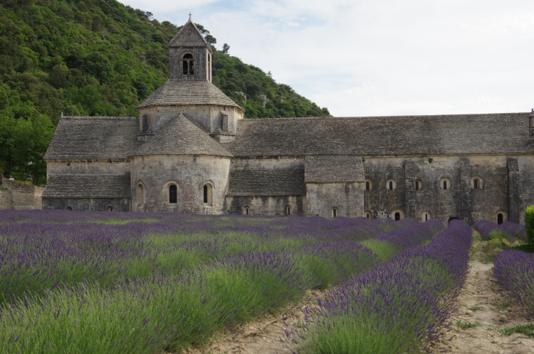 彌漫著紫色花香的薰衣草田,六至八月是盛放花季。