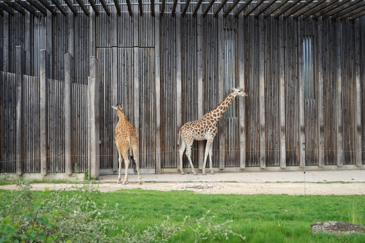 里昂動物園比起大球場還要大六倍,而且是免費入場。